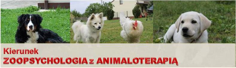 baner zoopsych z animaloter